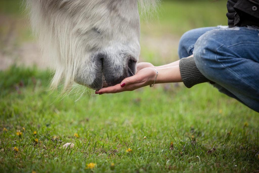 Mineralfutter für mein Pferd